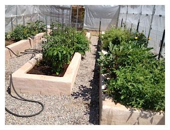 Hank's Garden