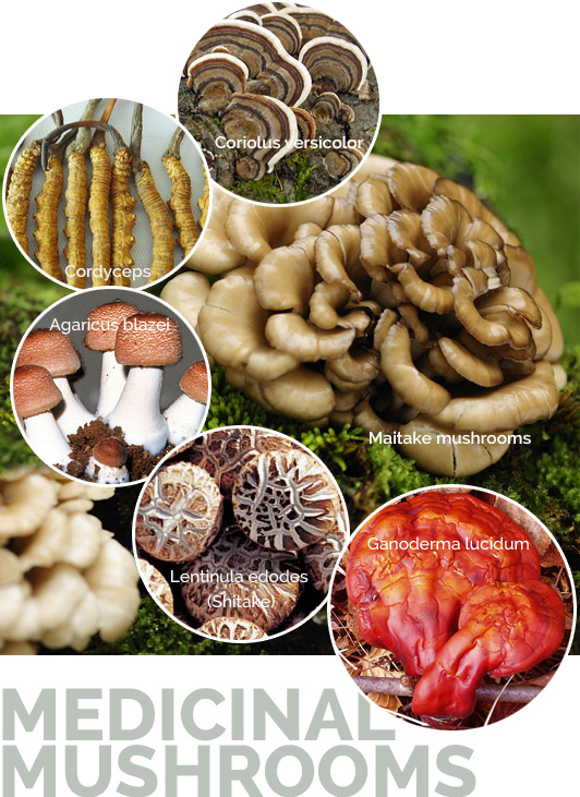 shrooms1 medicinal mushrooms Valley Fever