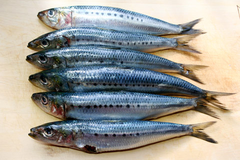 sardines dietary nucleic acids RNA fish diet
