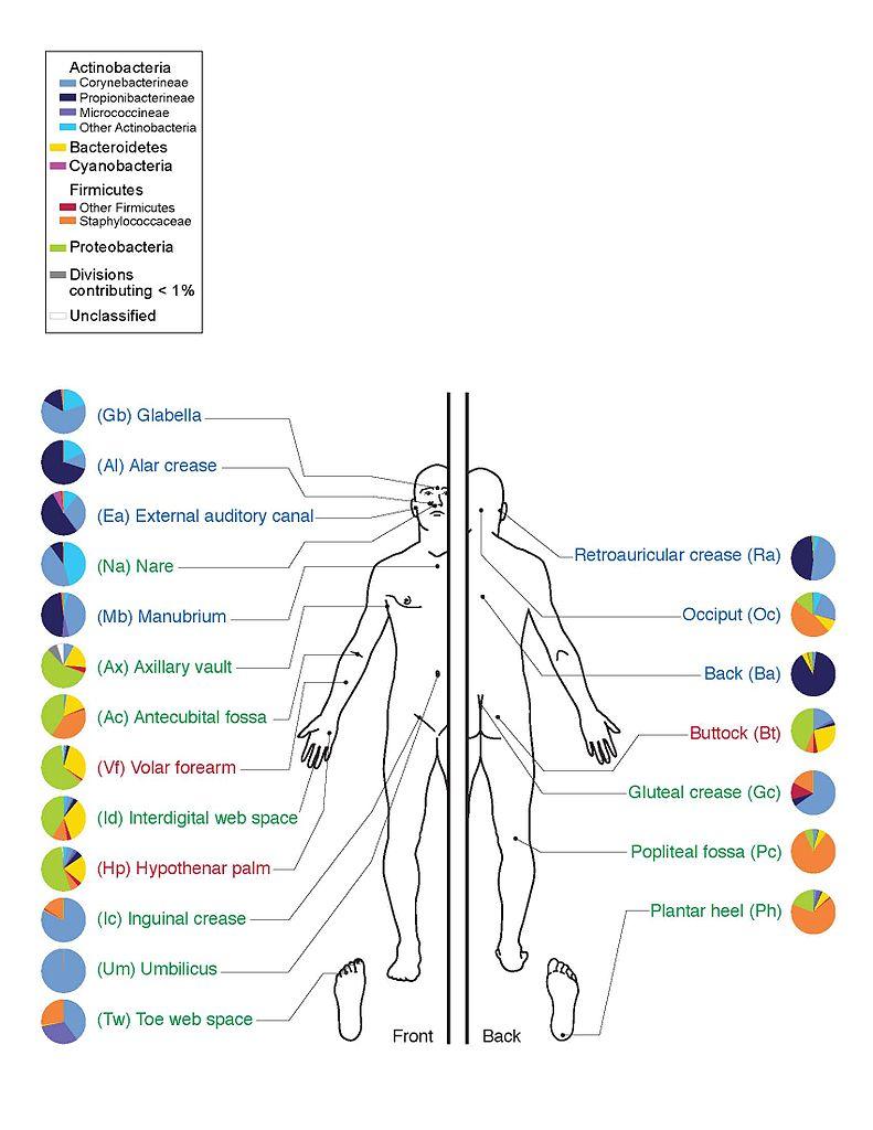 Human Microbiome Project Archives Integratedhealthblog Com