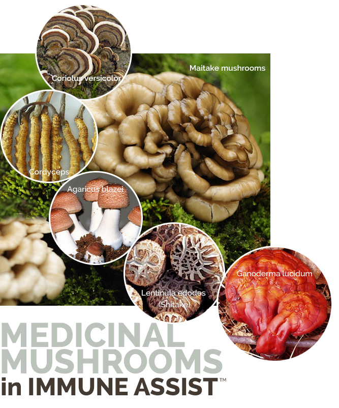 medicinal-mushrooms viruses